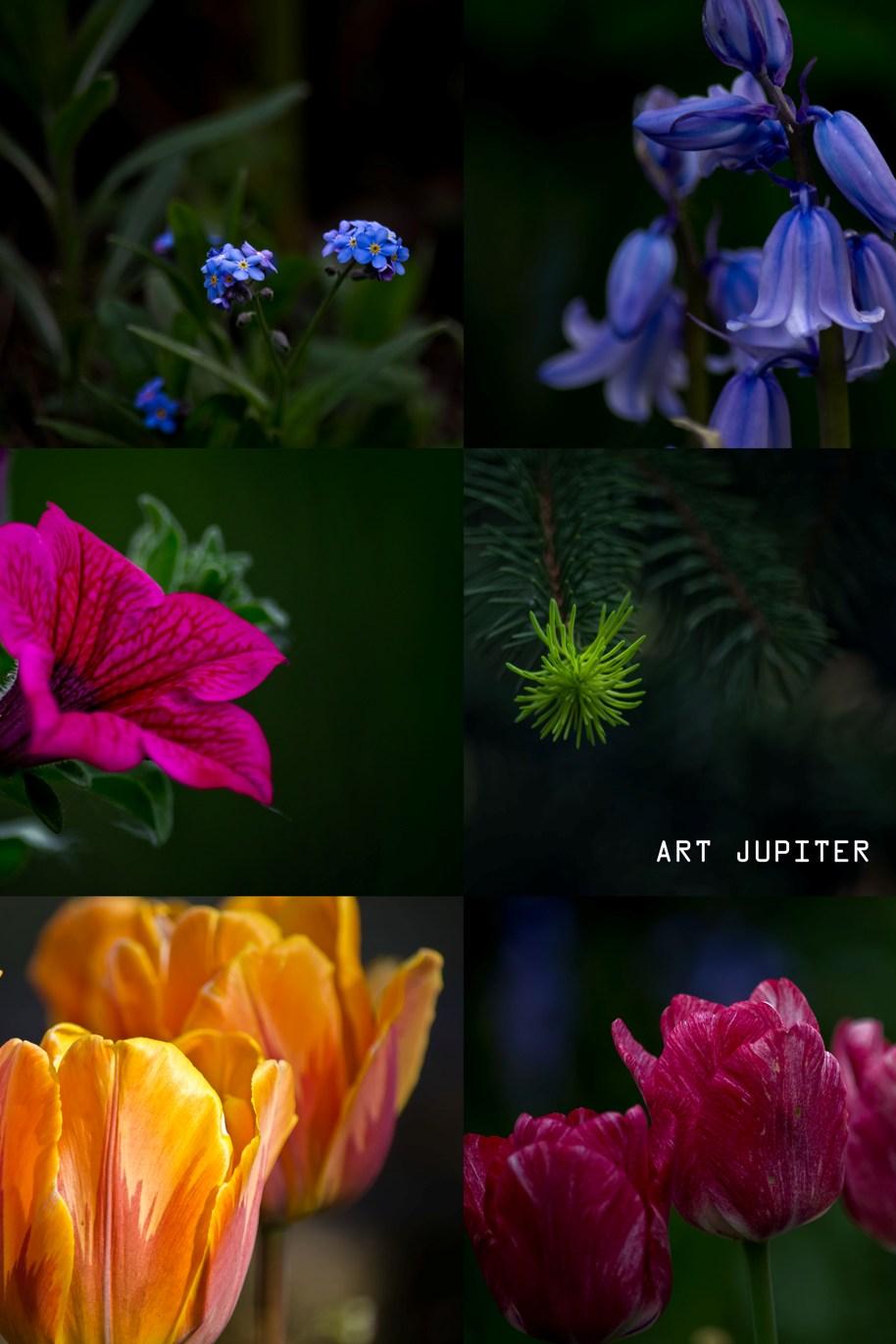 Art Jupiter